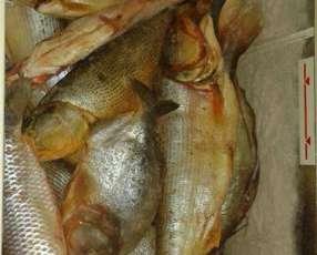 Pescado fresco Dorado y Surubi por Kg
