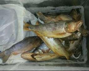 Pescado por kilo