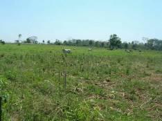 Campo de 23 hectáreas en Chore.