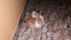 Conejitos hembra y macho