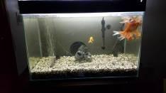 Pecera de 100 litros con peces