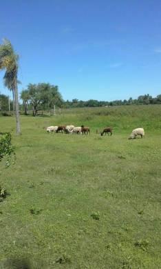 Casa quinta de 7,5 hectáreas en Loma Grande