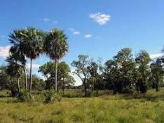 Finca con casa 1.700 hectáreas