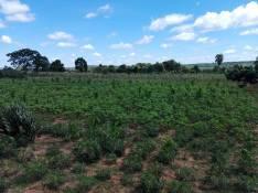 Terreno en Caaguazú 42 hectáreas