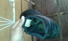 Champion Nike calce 37