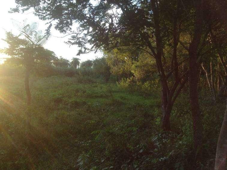 Terrenos en Arroyos y Estero a orillas del Rio Yhaguy - 6