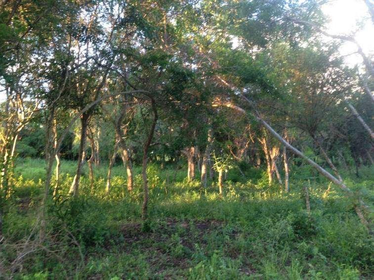 Terrenos en Arroyos y Estero a orillas del Rio Yhaguy - 5