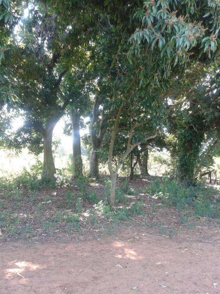 2 terrenos juntos en J Augusto Saldivar - 2