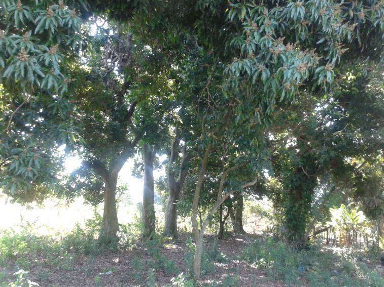 2 terrenos juntos en J Augusto Saldivar - 1