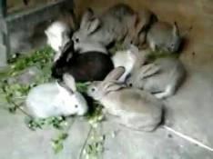 Conejos de uno y dos meses