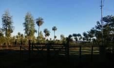 Terreno de 3 hectáreas y un cuarto