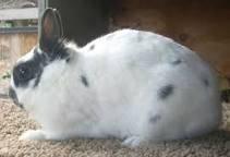 2 Conejos