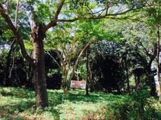 Terreno 24x30 en esquina Fernando de la Mora zona Sur