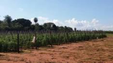 Terreno de 4 hectareas en Nueva Italia