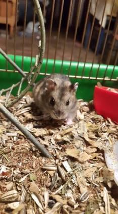 Hamster jaula y rueda