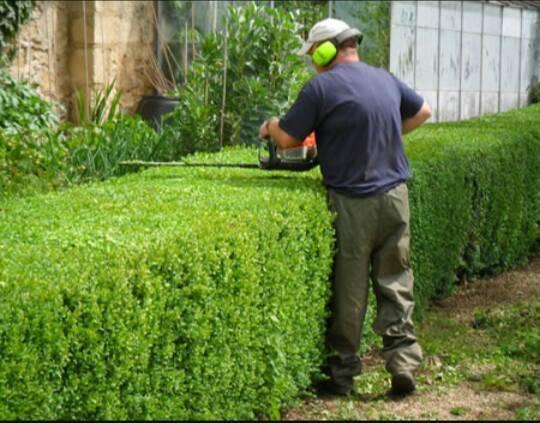 Servicio de jardiner a carlos morel d az id 303923 for Servicio de jardineria