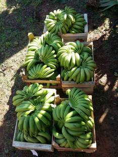 Cajas de banana