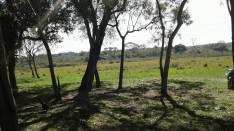 Campo en San Estanislao