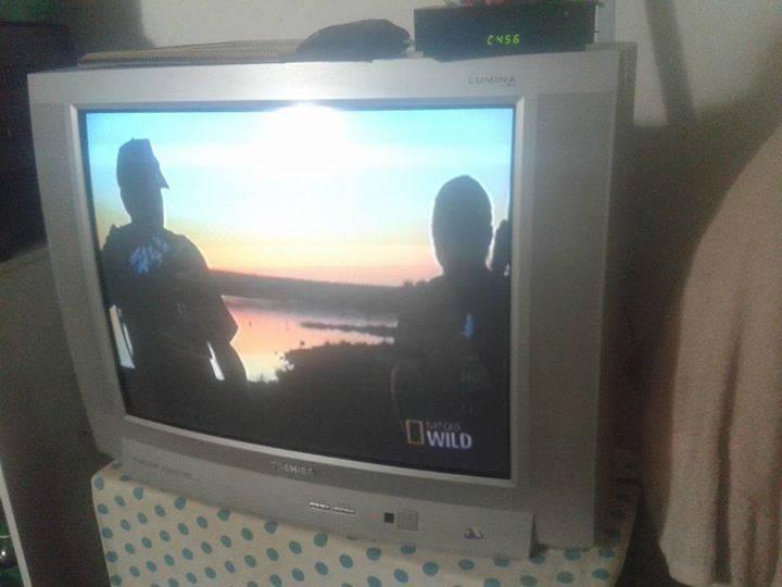 Televisor de 29 pulgadas toshiba mily for Televisor 15 pulgadas