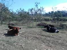 18 hectáreas en Arroyos y Esteros cod 648