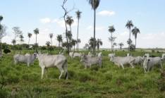 300 hectáreas en Santaní