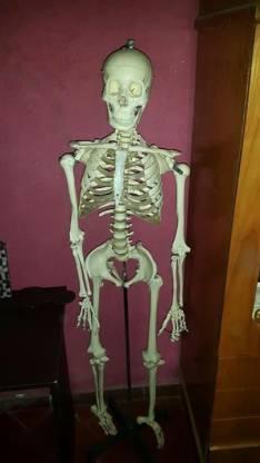 Esqueleto de plástico