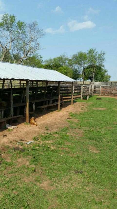 Terreno 200 hectáreas en Vaquería