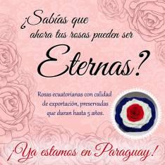Rosas ecuatorianas naturales eternas