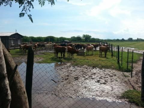 Departamento en Alto Paraguay
