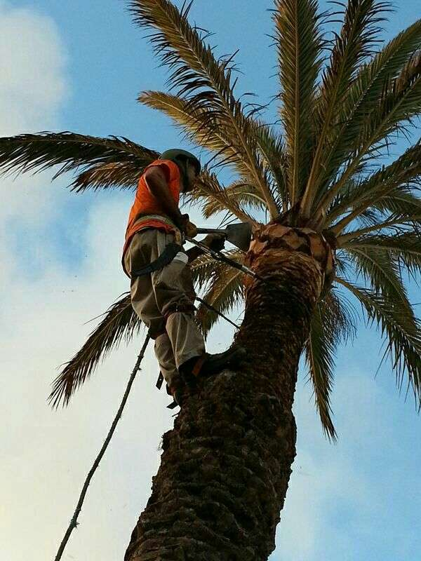 Corte de árboles y palmeras