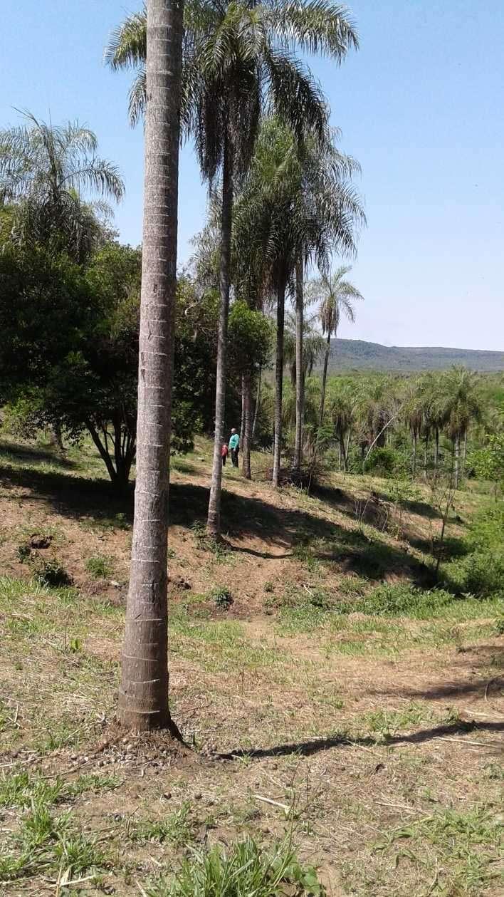 Terreno de 4 hectáreas en Caacupé