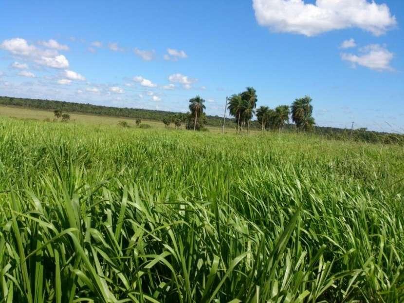 Campo de 122 hectáreas - 1