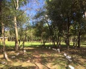 Granja en Nueva Colombia