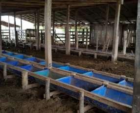 2 Campos en General Aquino para engorde de ganado