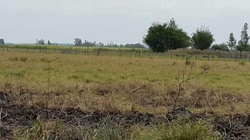 Finca 9 hectáreas en la ciudad de Gral Aquino - 3