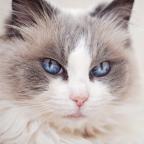 Galaxy Cat - 325415
