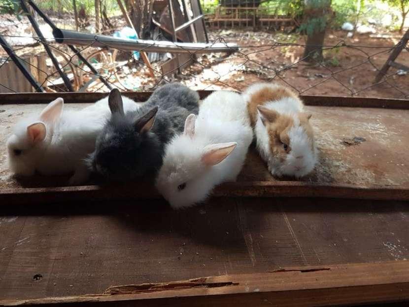 Conejos cabeza León y enanos
