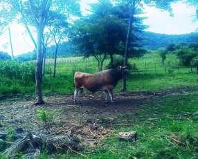 Terreno 20 hectáreas en Paraguarí Escobar