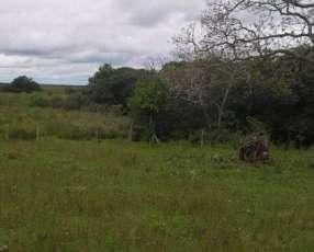 Terreno 1.241 hectáreas en Mbuyapey para reforestación.