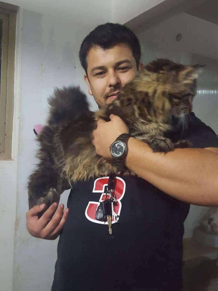 Gatos exóticos - 2