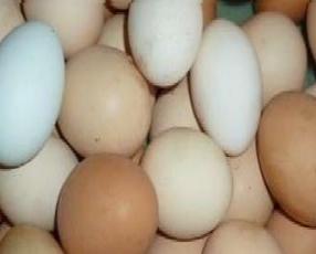 Huevos caseros ecológicos