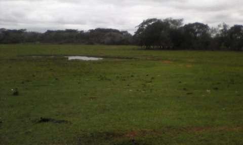 Terreno de 20 hectáreas - 1