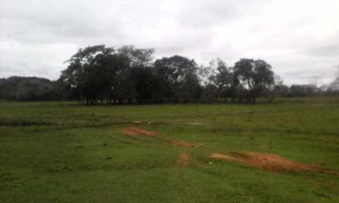 Terreno de 20 hectáreas - 5
