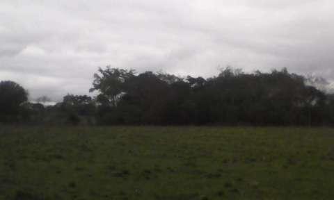 Terreno de 20 hectáreas - 6