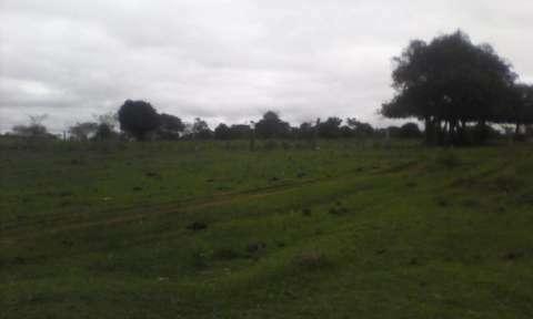 Terreno de 20 hectáreas - 7