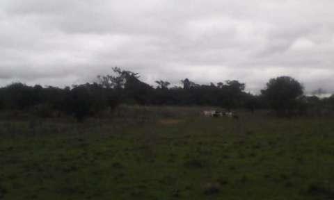 Terreno de 20 hectáreas - 9