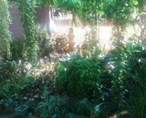 Liquidación de stock de plantas y planteras