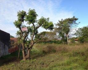 Terrenos en Limpio cerca de Abasto Norte y Universidad