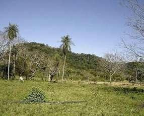 Propiedad de 122 hectáreas en Caballero Paraguarí cod M1499