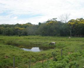 Terreno de 18 hectáreas en Coronel Oviedo